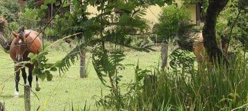 Konie w miastowym gospodarstwie rolnym zdjęcie stock
