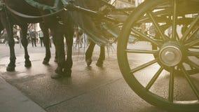 Konie w mieście Wiedeń obrazy stock