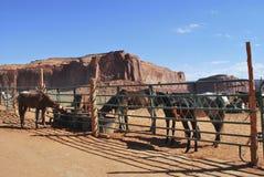Konie w pustyni Zdjęcia Stock