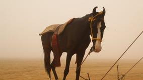Konie w pustyni zbiory wideo