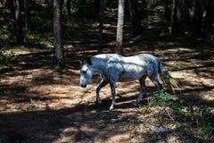 konie w warunkach polowych zdjęcie stock