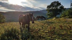 Konie w Welsh gospodarstwie rolnym fotografia stock