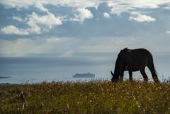 Konie w Wielkanocnej wyspie Zdjęcie Stock