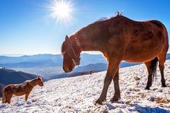 Konie w zima zdjęcia royalty free