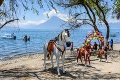 Konie & wulkan, Jeziorny Atitlan, Gwatemala Zdjęcia Stock