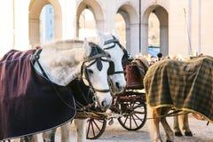 Konie z furgonami w zimie na głównym placu Salzburg w Austria Rozrywka turyści, jedzie wakacje fotografia stock