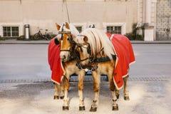 Konie z furgonami w zimie na głównym placu Salzburg w Austria Rozrywka turyści, jedzie wakacje obrazy royalty free