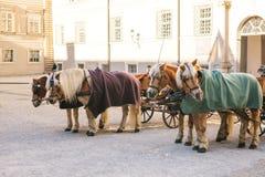 Konie z furgonami w zimie na głównym placu Salzburg w Austria Rozrywka turyści, jedzie wakacje obraz stock