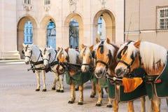 Konie z furgonami w zimie na głównym placu Salzburg w Austria Rozrywka turyści, jedzie wakacje zdjęcie royalty free