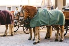 Konie z furgonami w zimie na głównym placu Salzburg w Austria Rozrywka turyści, jedzie wakacje zdjęcia stock