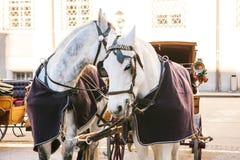 Konie z furgonami w zimie na głównym placu Salzburg w Austria Rozrywka turyści, jedzie wakacje fotografia royalty free