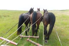 Konie z plandeka samochodem przy wybrzeżem Zdjęcia Royalty Free