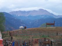 Konie z widokiem Skalistych gór Zdjęcia Stock