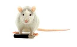 koniec usb szczura Zdjęcia Royalty Free
