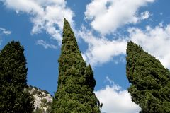 Koniferenbäume gegen Lizenzfreies Stockfoto