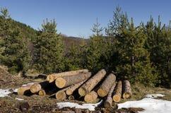 Koniferenbauholz in einem Berg während des Winters Lizenzfreies Stockbild