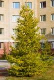 Koniferenbaum-Lärchengelbnadeln im Herbst Lizenzfreies Stockbild