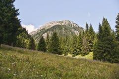 Koniferenwald auf dem Berg stockbild