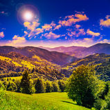 Koniferenwald auf einem steilen Berghang Lizenzfreie Stockbilder