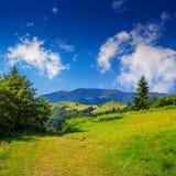 Koniferenwald auf einem steilen Berghang Stockfoto