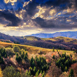 Koniferenwald auf einem steilen Berghang Stockbild