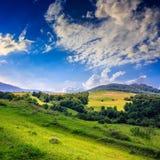 Koniferenwald auf einem steilen Berghang Lizenzfreie Stockfotografie
