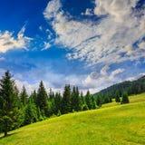 Koniferenwald auf einem steilen Berghang Stockfotografie