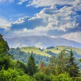 Koniferenwald auf einem steilen Berghang Lizenzfreies Stockfoto