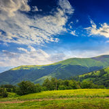 Koniferenwald auf einem steilen Berghang Stockbilder