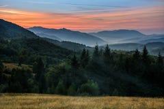 Koniferenwald auf einem steilen Berghang am Abend Stockfotos