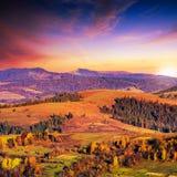 Koniferenwald auf einem steilen Berghang bei Sonnenuntergang Lizenzfreie Stockfotografie