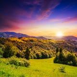 Koniferenwald auf einem steilen Berghang bei Sonnenuntergang Stockfotografie