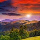 Koniferenwald auf einem steilen Berghang bei Sonnenuntergang Stockfotos