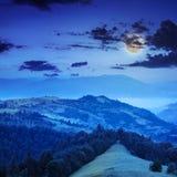 Koniferenwald auf einem steilen Berghang nachts Stockbilder