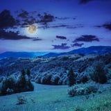 Koniferenwald auf einem steilen Berghang nachts Stockfoto