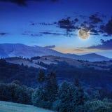 Koniferenwald auf einem steilen Berghang nachts Stockfotografie