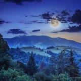 Koniferenwald auf einem steilen Berghang nachts Lizenzfreies Stockbild