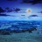 Koniferenwald auf einem steilen Berghang nachts Stockfotos