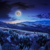 Koniferenwald auf einem steilen Berghang am nidght Lizenzfreie Stockbilder