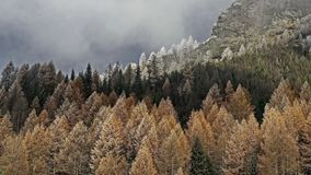 Koniferenwald in den Bergen Morgenreif auf den Bäumen Erster Hoarfrost lizenzfreie stockbilder