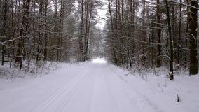 Koniferenwald des fabelhaft schönen Winters stock video footage