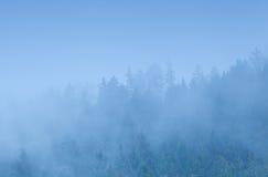 Koniferenwald im dichten Nebel Stockfotos