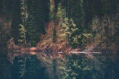 Koniferenwald- und Seespiegelreflexion Stockfotografie