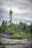 Koniferenwald unter drastischem Himmel lizenzfreie stockbilder