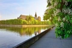 Konigsberg domkyrka på den Kneiphof ön Kaliningrad förr K Royaltyfria Bilder