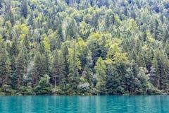Konigssee dichtbij Duitse die Berchtesgaden met bomen wordt omringd stock foto's
