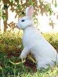 konijn Royalty-vrije Stock Fotografie