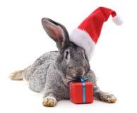 Konijn in een Kerstmishoed royalty-vrije stock afbeelding