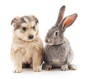 Konijn en hond Royalty-vrije Stock Fotografie