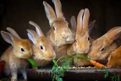 Konijn en kleine konijnen Royalty-vrije Stock Afbeeldingen